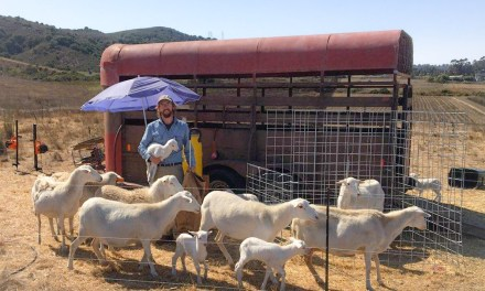Disabled Air Force Veteran Can Manage Livestock Thanks to Farm Credit Grant