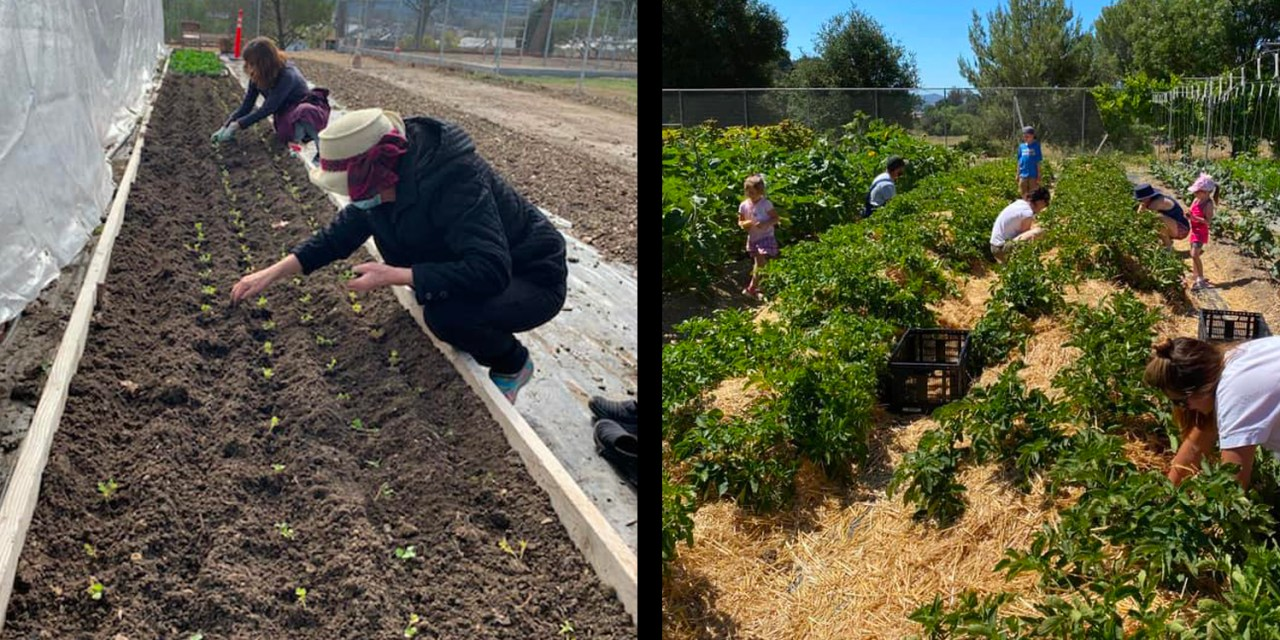 Templeton Hills Community Farm Impacting Their Community One Seed at a Time