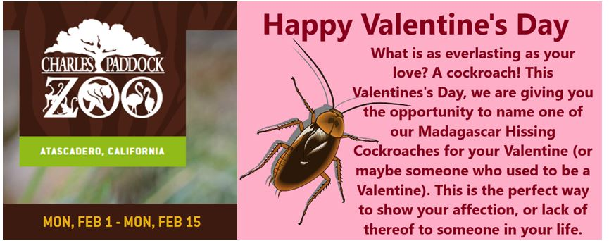 Charles Paddock Zoo Presents Adopt-a-Cockroach Valentine!