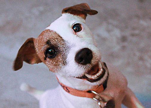 Pet Photographer in Atascocita- Meet Fancy