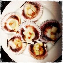 scallops on the half shell