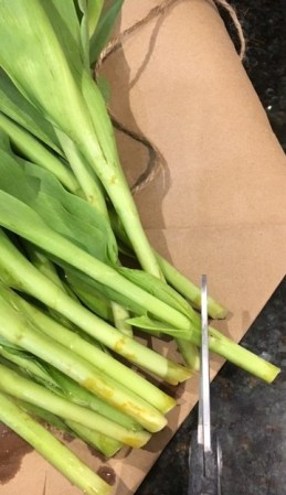 The stems of tulips being trimmed.