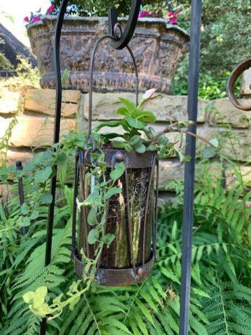 Garden lantern I phone 1