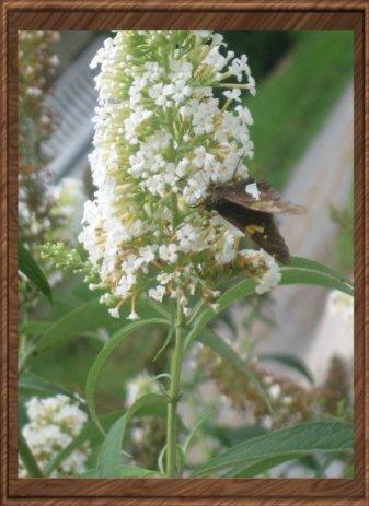 daabe-butterflyonflower