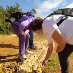 Ruta senderista sobre fósiles para el C.P.A. Los naranjos II.