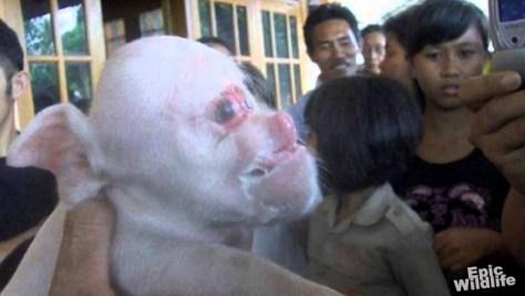bottom pig 2 disturbed chinese girl