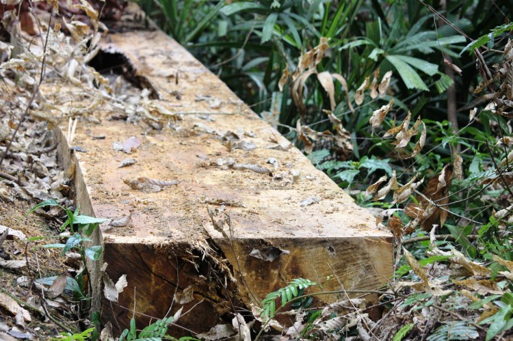 """Nhiều nơi rừng bị tàn phá quá nhanh đã khiến hàng ngàn hécta rừng """"bốc hơi"""" khó hiểu. (Ảnh: Vietnam+)"""