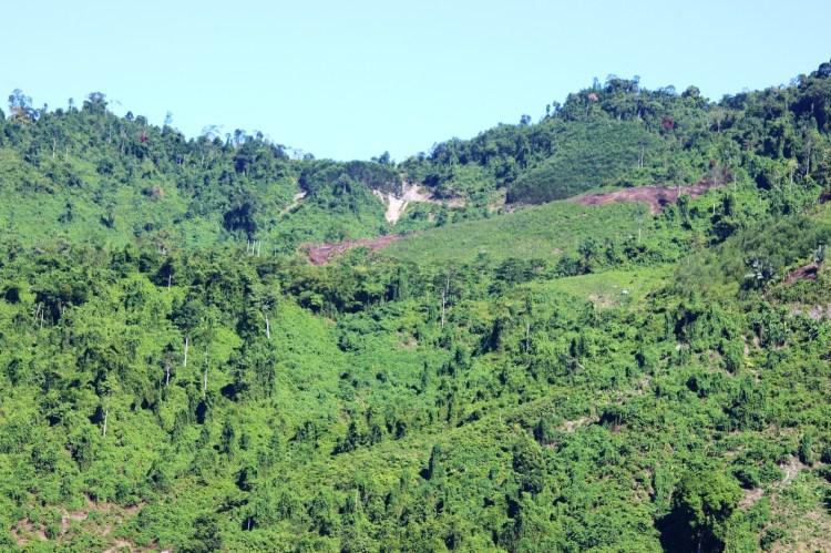 Lắng nghe tiếng rừng, chớ khai thác cây non. (Ảnh: Vietnam+)