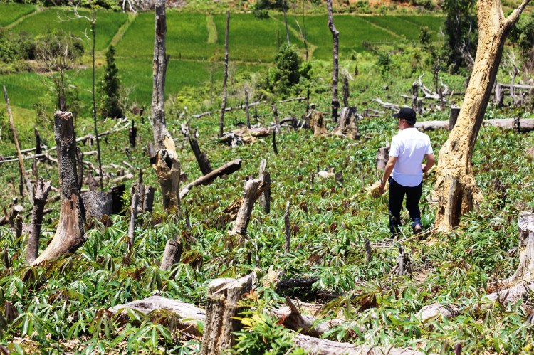 Phóng viên tác nghiệp tại một khu rừng đã bị người dân chặt hạ để làm nương rẫy. (Ảnh: Vietnam+)