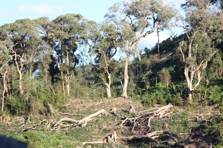 Khu rừng này giao cho cộng đồng bảo vệ, nhưng hàng ngày vẫn bị chặt phá. (Ảnh: Vietnam+)
