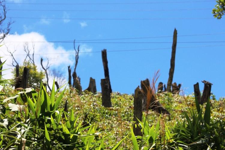 """Một khu rừng bị chặt hạ, chỉ còn lại """"xác cây"""" nằm ngổn ngang tại xã Hiếu. (Ảnh: Vietnam+)"""