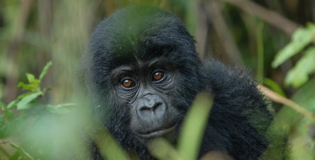 The Uganda Wildlife Authority - Conserving for Generations