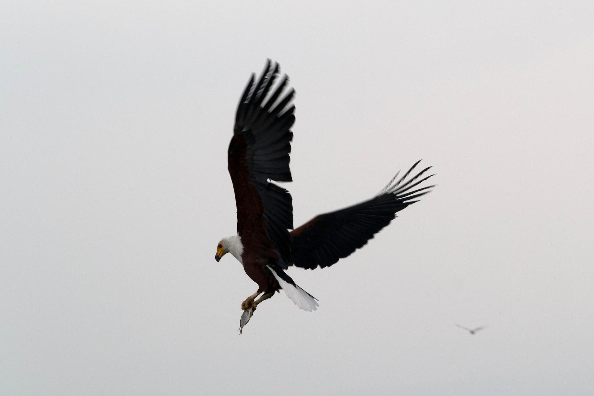Safari w Kenii: jezioro Naivasha