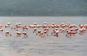 Safari w Kenii: jezioro Nakuru