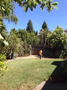 Willow Tree Removal 2
