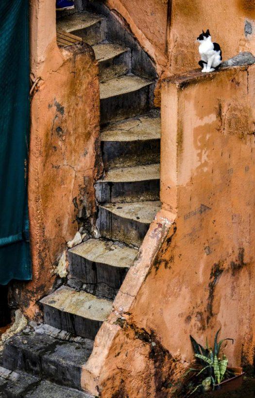 © Torsten Gripp | 2019 | Fotografie - Katze in Marakesh