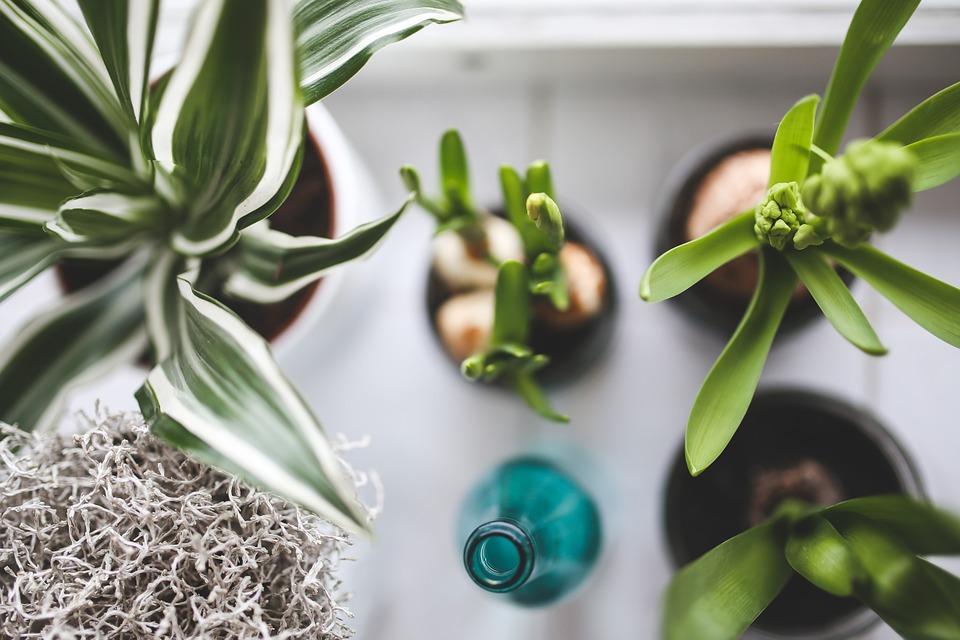 """Résultat de recherche d'images pour """"plantes dépolluantes intérieur"""""""