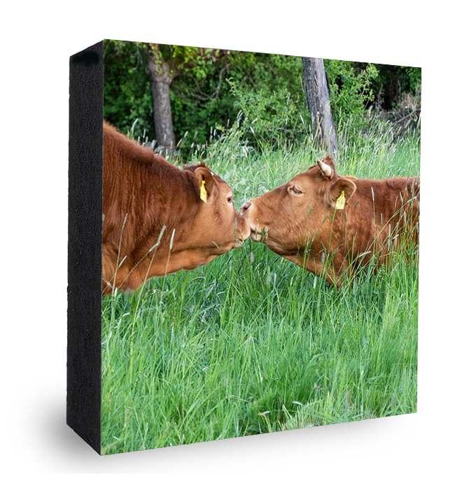 Küssende Kühe Bad Soden