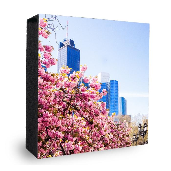 Kirschblüte Frankfurt