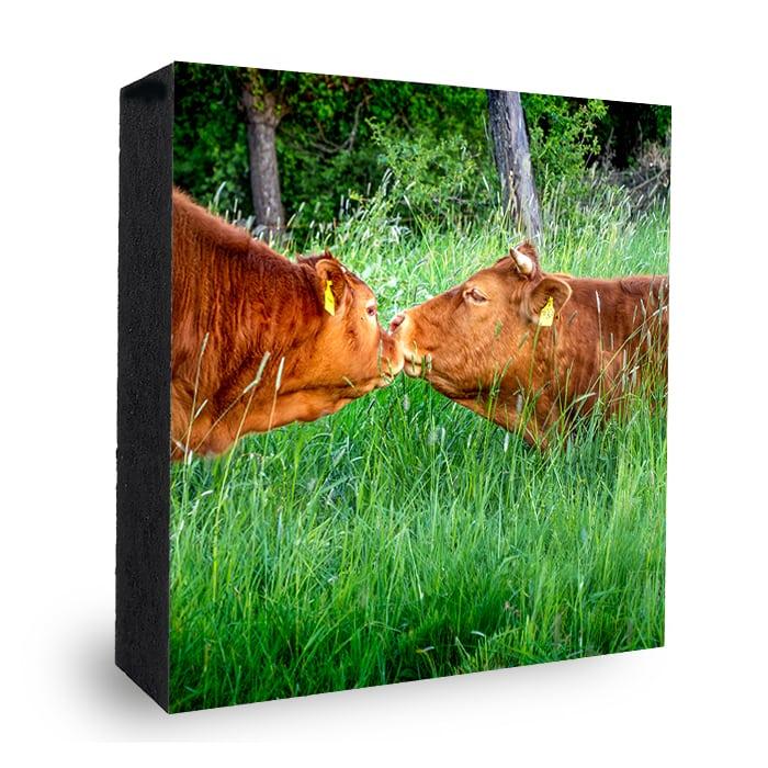 Kuh-Kuss Bild auf Holz