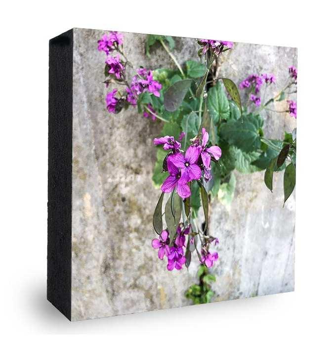 Natur Mauerblümchen