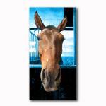 Pferd im Stall Hintergrund Blaufaerbung