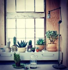 Assortiment de plantes vertes