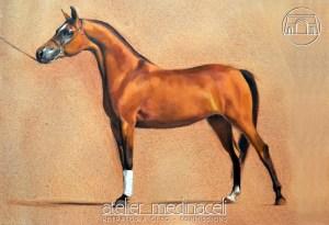 Cavalo2_marca_dagua