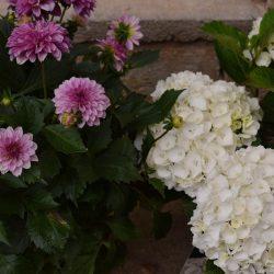 mooie bloemen kado
