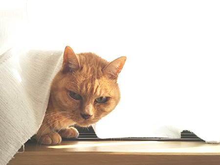 窓辺のちび猫