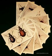 [10] Postais - Insectos - «€10.00»
