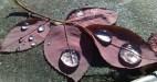 cropped-01112012419.jpg