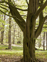10 Best Trees For Wisconsin Landscapes American Tree Experts