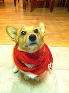 Topper in scarf