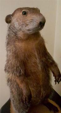 Edited Groundhog