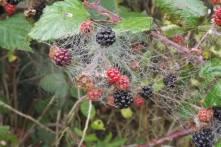 web berry