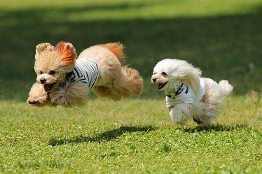愛犬と一緒に行ける人気のスポット5選!【関西版】