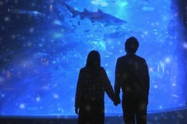寒い冬こそ館内デートでゆっくりと♡全国の水族館人気ランキング