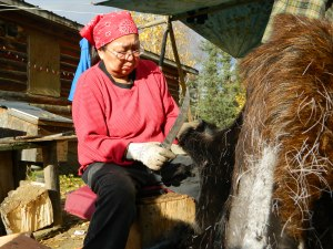 Eleanor Yatlin scrapes moose hair off a moose hide. Photo by Angela Gonzalez