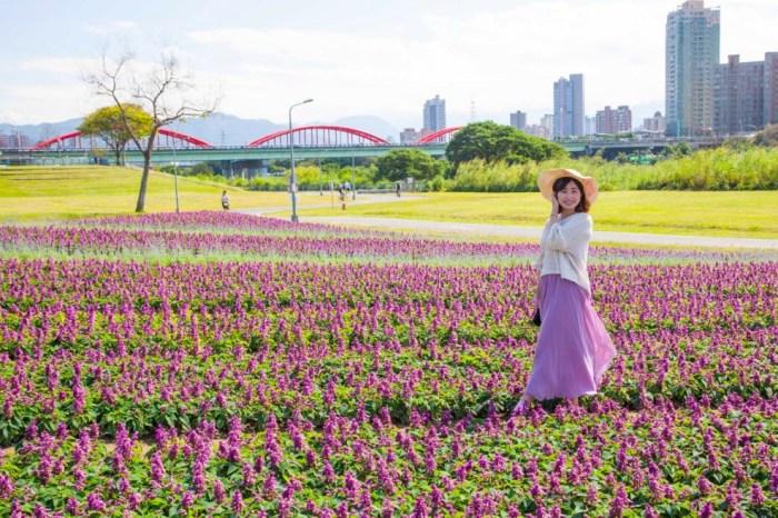 台北城市旅行・古亭河濱公園 超浪漫紫色花海 適合拍照打卡 網美都來這 #20210224最新花況