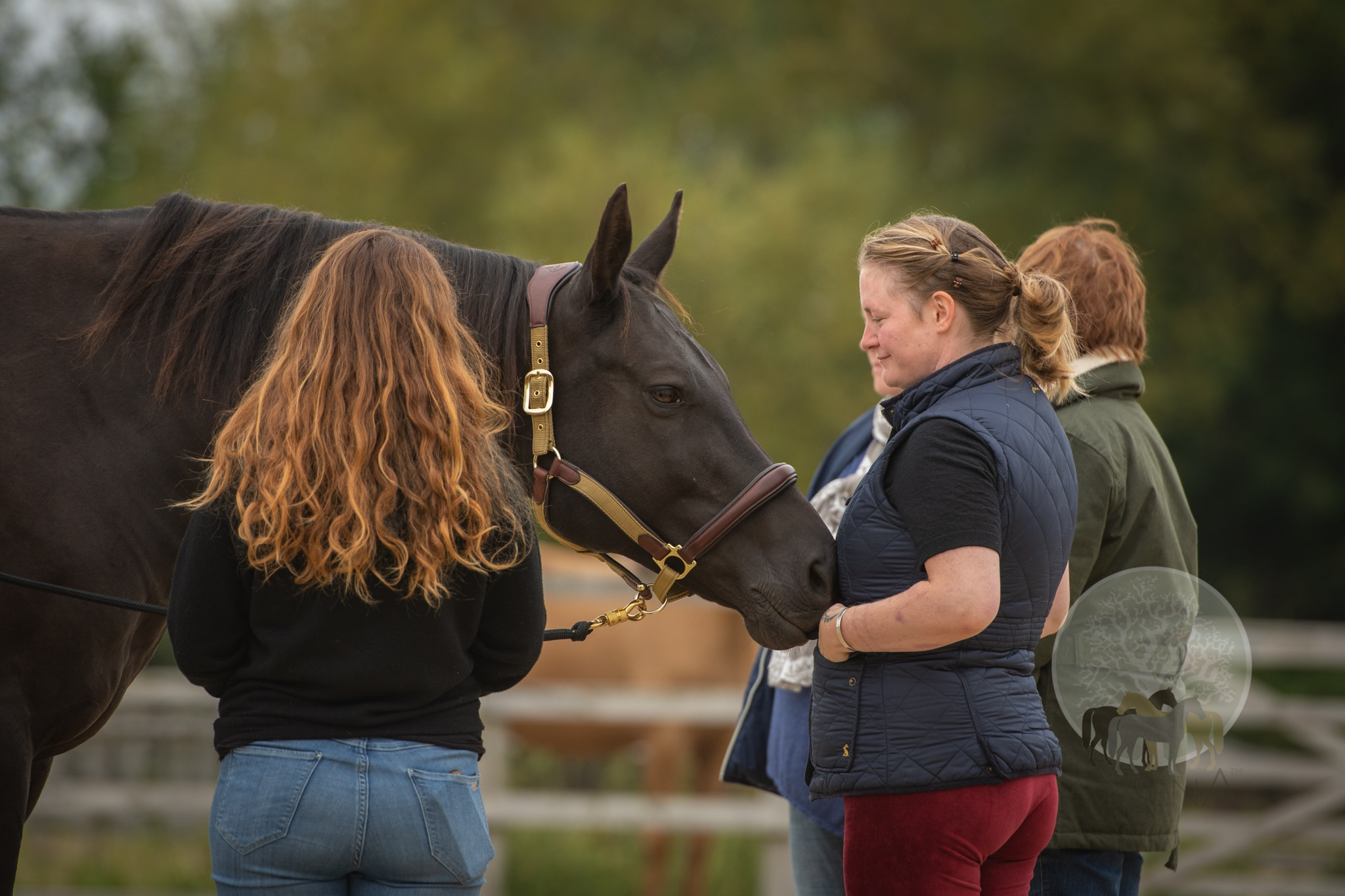 Athena Herd Equine Facilitated Learning