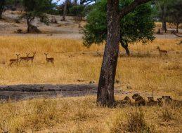 Safari Day 1-129