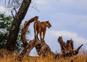 Safari Day 1-152