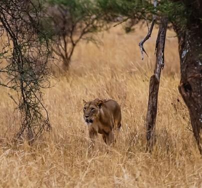 Safari Day 1-155