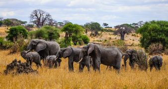 Safari Day 1-53