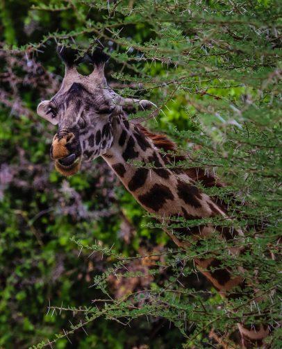 Safari Day 1-86
