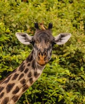 Safari Day 2-96