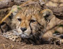 Safari Day 3-29