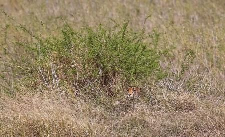 Safari Day 3-38