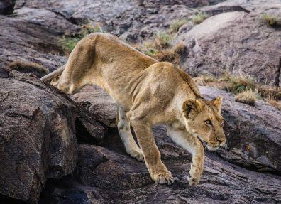 Safari Day 3-47